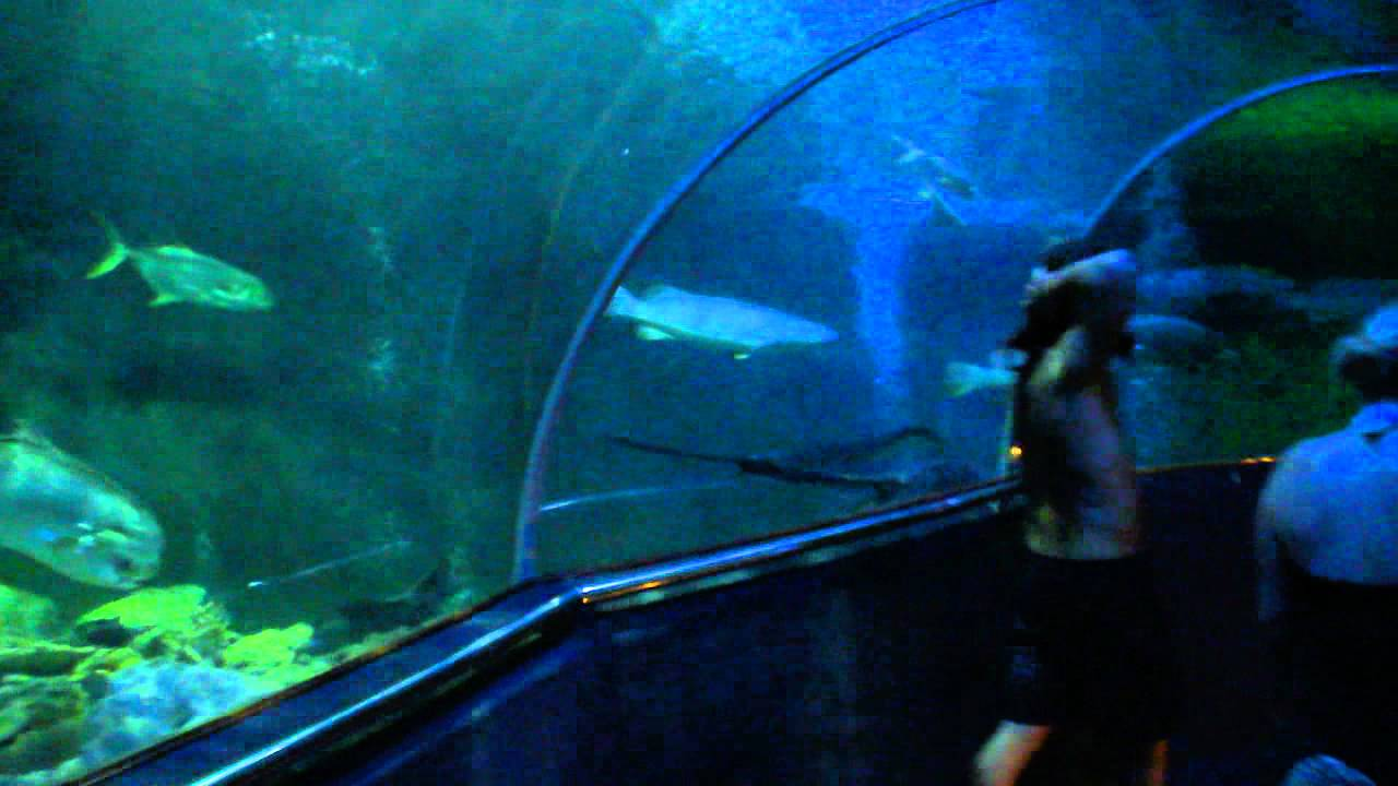Glass tunnel in Underwater World at Vinpearl - YouTube