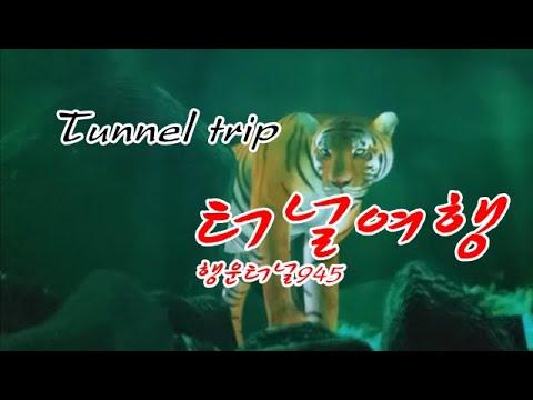 #터널여행 ㅡ[행운터널-945]  #호령터널 #상주영천간고속도로에 위치한 터널입니다 #LOTTO정보포함 #로또945회