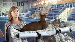 Могилёв. Выставка кошек