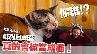 超意外戴貓耳頭套真的會被當成貓【好味貓日常】EP61
