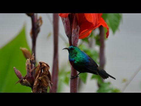 Birding in Uganda - The Pearl of Africa