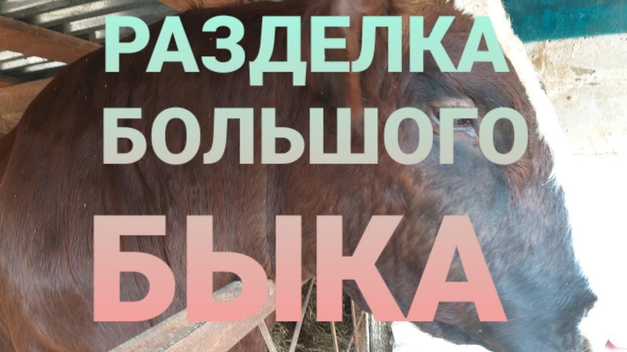 РАЗДЕЛКА БЫКА/ ДЕРЕВЕНСКИЙ  РАЗГОВОР