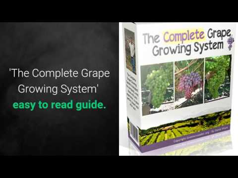 How to Grow Grapes Review 3