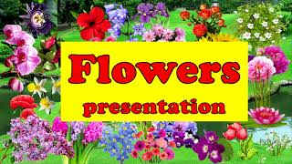 Цветы.  Презентация. Английский для детей