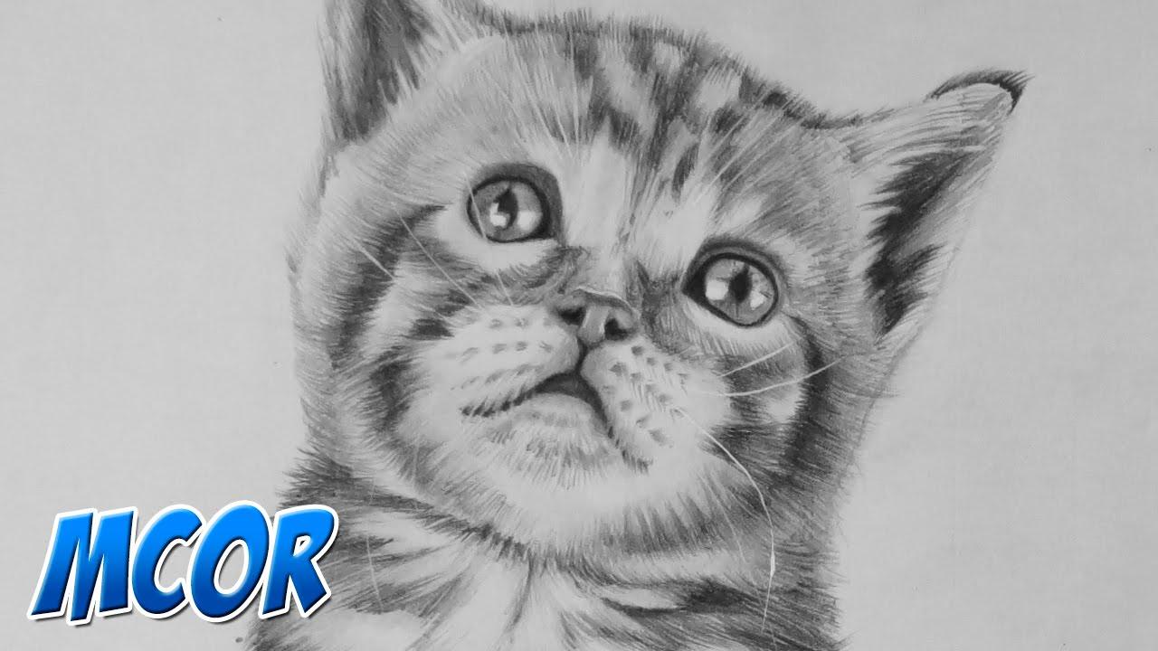 Dibujando a un Gato Bebe Realista - YouTube