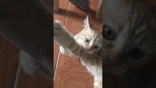 The Most Naughtiest Ginger Cat Ever