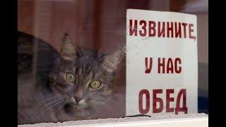 Позы для игр и сна у котов: как понять язык животных