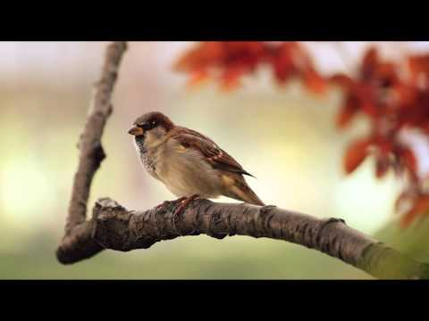 1 Hour Birdsong Sounds on a Spring Morning in English Countr