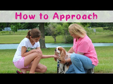how to teach a dog to beg video