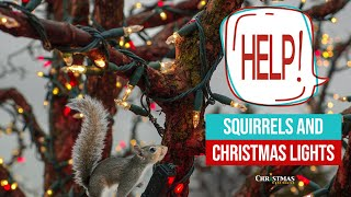 Help! Squirrels and Christmas Lights