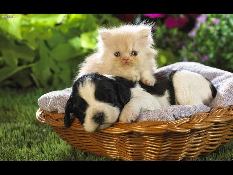 adorable dogs and cute cats videos compilations - cute and funny puppies
