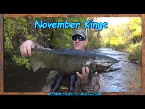 Epic November King  Salmon run - Oak Orchard