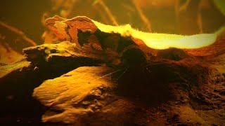 Запуск биотопного аквариума Южной Америки