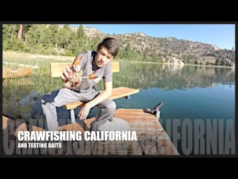 Crawfishing California, Jordan Tests Baits To Find The Most Effective One