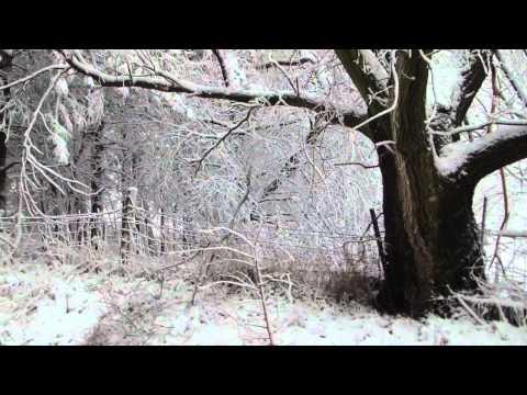 Wintery Saturday Morning in Nebraska 2012-02-04
