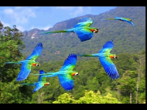 Discovery Channel Hd Wallpapers Colorful Parrots Colorful Birds Colourful Birds Sitting