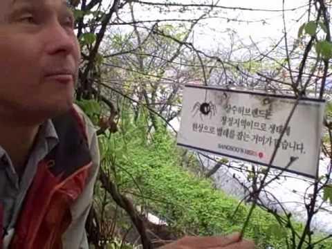 A Visit to a World Class Herb Theme Park - Sangsoo Herb Land