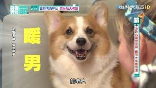 【寵物大聯萌#完整版】寵物溝通神扯 真心話大考驗2016.12.04