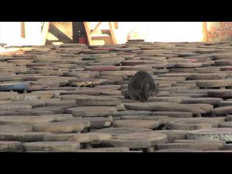 ZEITmagazin und WELTKUNST besuchten Ai Weiwei
