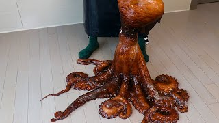900$ , 37pounds  Extraordinary Devil Octopus for carpaccio