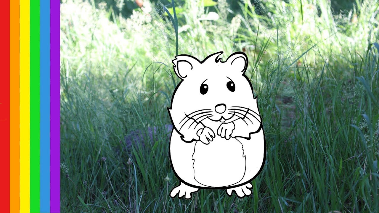 hamster coloriage animaux pour enfants how to draw animals coloring pages youtube. Black Bedroom Furniture Sets. Home Design Ideas