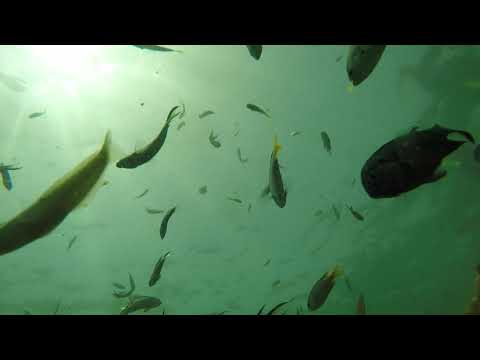 Churna Island | Swimming With The Fishes  Charna Island | Karachi Diving | Scuba Diving In Pakistan