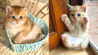 Baby Cats - Cute and Funny Cat Videos Compilation #28 | Aww Animals