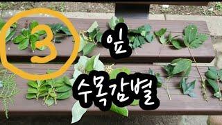 2020 .설명. 수목감별 시험 잎 비교 3
