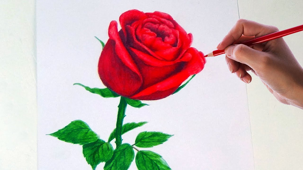 Drawing A Rose Flower With Simple Colored Pencils | - YouTube