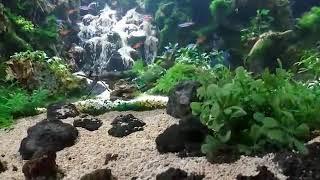 Aquascape semarang by : gado2 aquascape