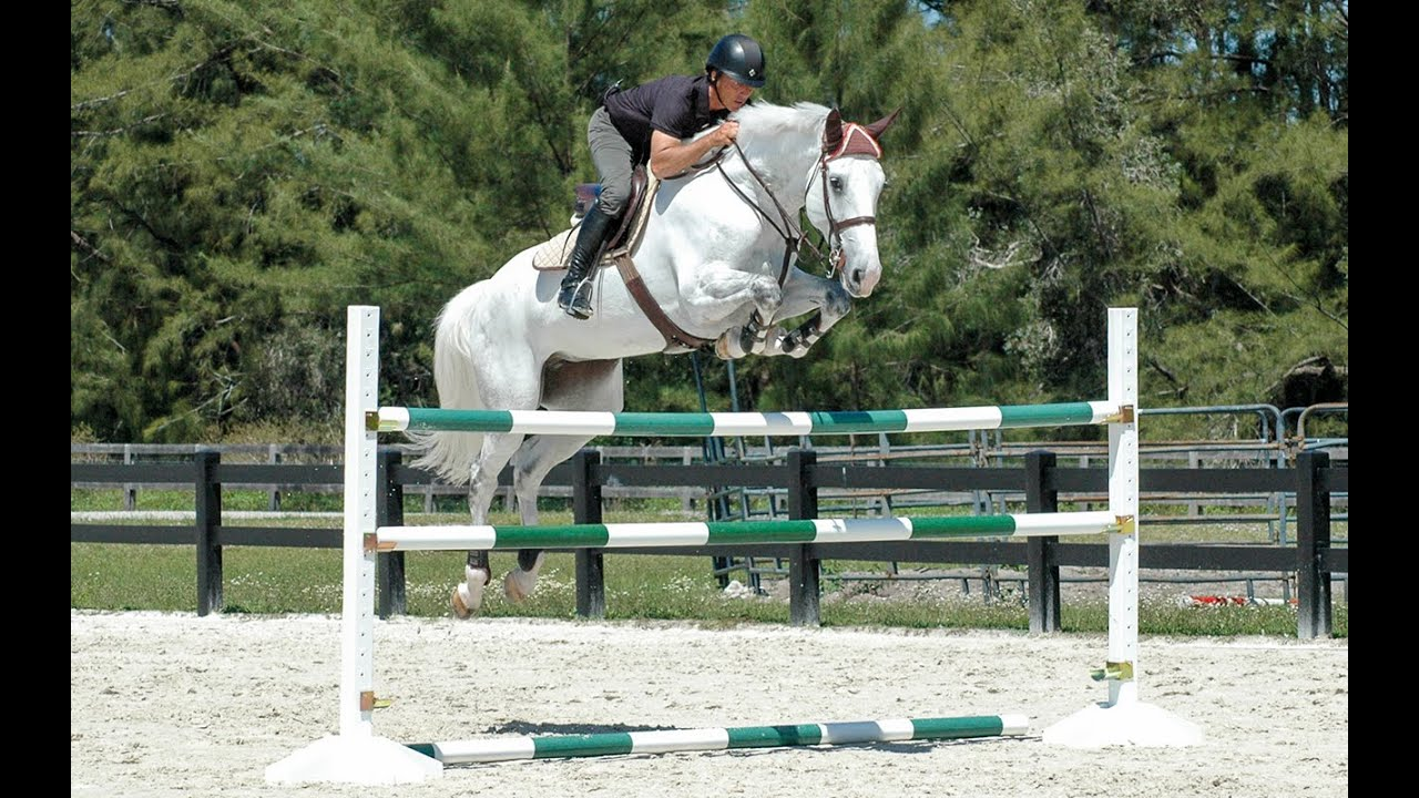 horse jumps protips ride a course with todd minikus youtube