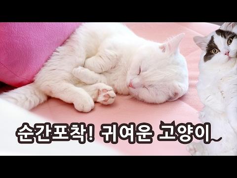 고양이 귀여운 순간 모음 Cute Cats Compilation