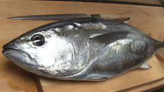 マグロ(メジ)のさばき方~握りと刺身の作り方 寿司屋の仕込み  how to fillet a tuna and make sushi and sashimi