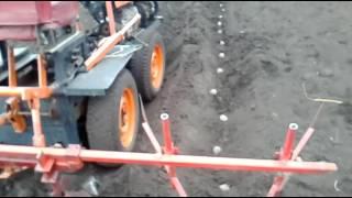 Интересный способ посадки картофеля окучником с одновременным закрытием борозд