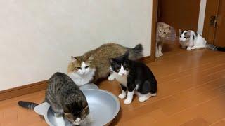 気になって次々と集まってくる猫がかわいい
