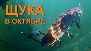 Щука в октябре Рыбалка в Актобе Казахстан