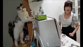 離乳食を作るママ & 料理が気になる白モフ猫