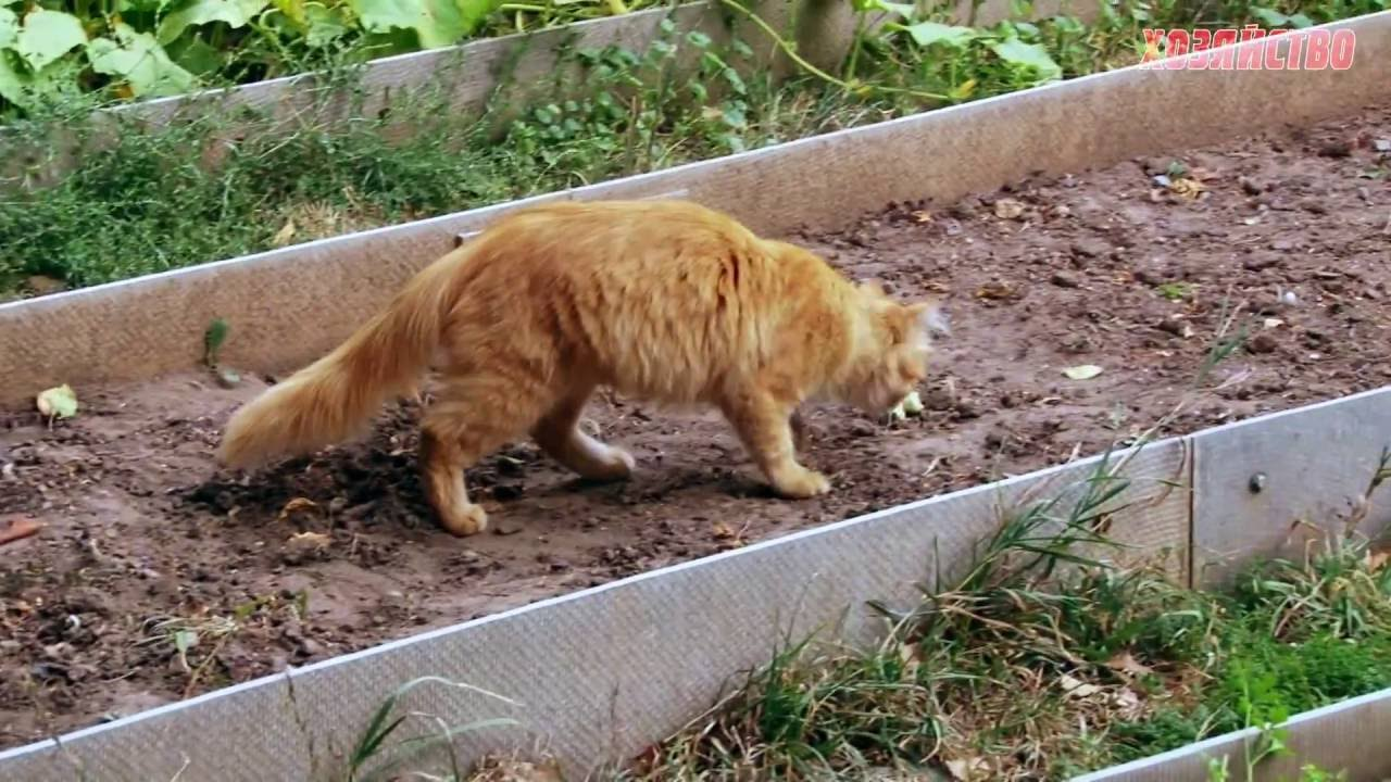 Чем отвадить кошек от огорода