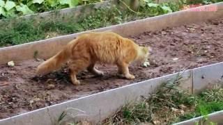 Как отвадить кошку гадить на грядках
