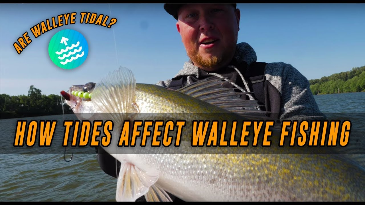 WALLEYE Fishing Tips & Tricks | How Tides Affect WALLEYE