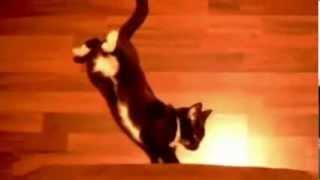 Funny Cats Cat Slips  Кот падает во сне