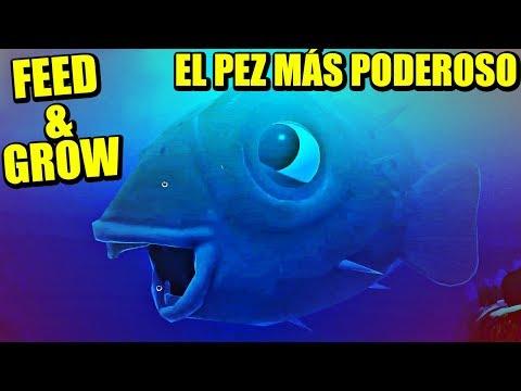 TANTO DAÑO QUE CRASHEA EL JUEGO - FEED AND GROW FISH | Gameplay Español