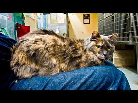 camilla-the-affectionate-explorer---adopted!