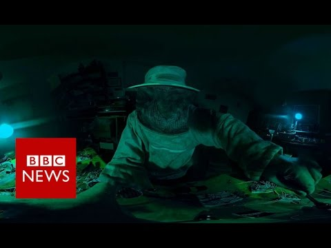 Resistance of Honey Master (360 video) – BBC News