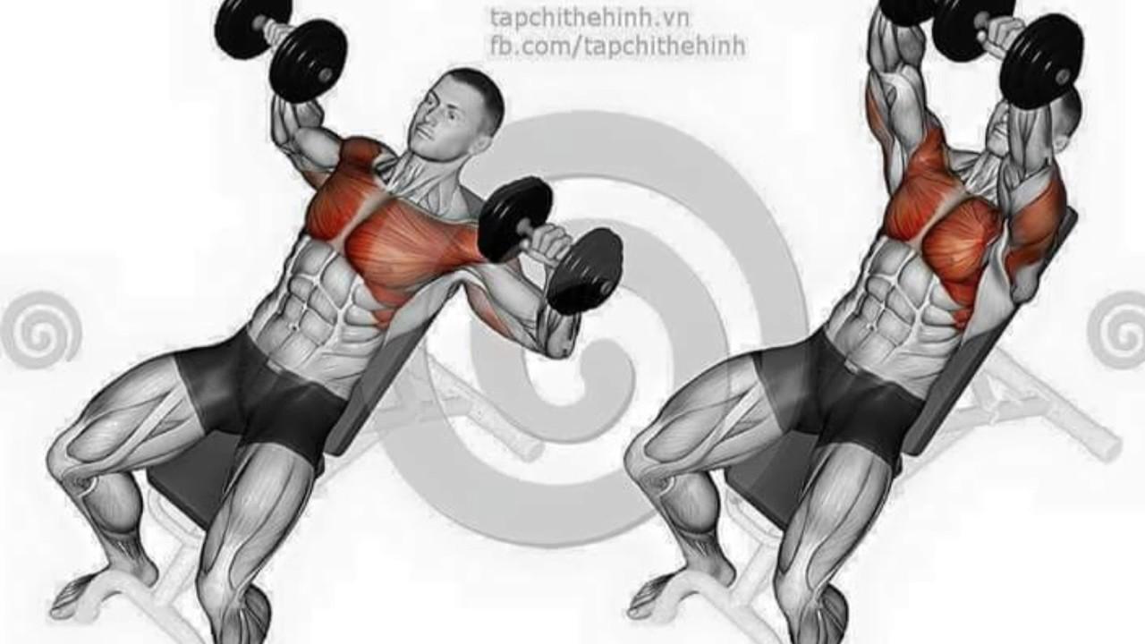 Tổng hợp các bài tập cơ ngực có hình ảnh minh họa