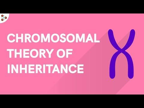 Genetics - Chromosomal Theory Of Inheritance - Lesson 9