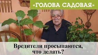 Голова садовая - Вредители просыпаются, что делать?
