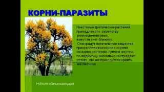 Значение корней и их разнообразие.AVI