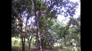 FERRAREN - (BONG) Man Made Paradise, La Suerte, Pagadian City - 8.10.14