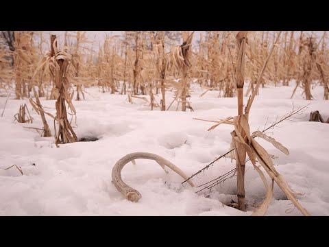 Shed Antler Hunting - NDGNF - 02-18-2020
